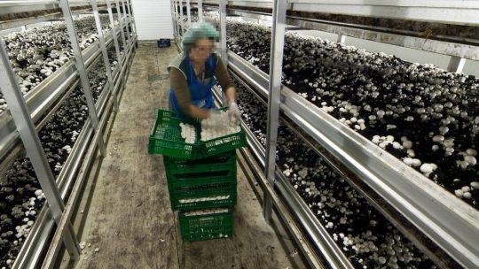 Sousacamp retira direitos para intensificar produção